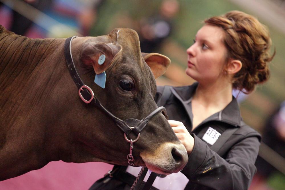 beef cattle veterinarian dr - 1000×666