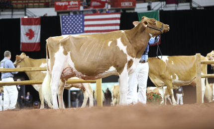 8bd8156e Compete on The Colored Shavings - WDE Entries Open. World Dairy ...